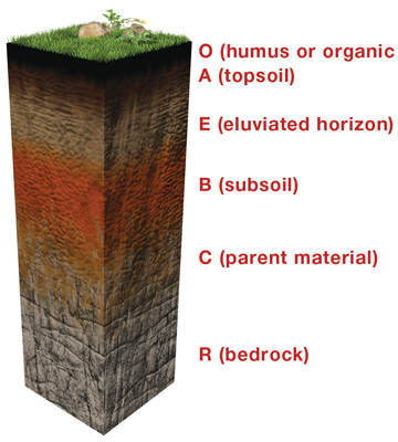 All about soil soils 4 kids for What are the different layers of soil